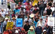 ../../Community opposition to GE crops in WA continues to grow, despite the Government's disregard for public opinion